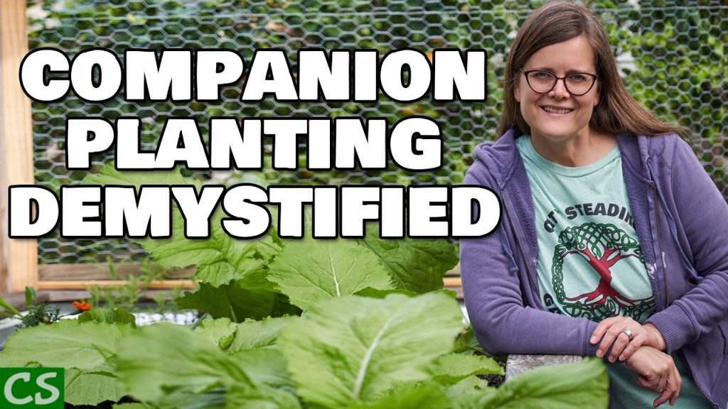 companionPlanting-1024x576.jpg